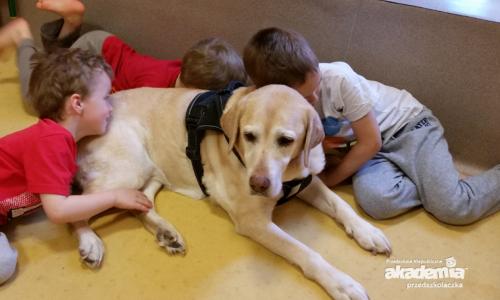 Psy w przedszkolu