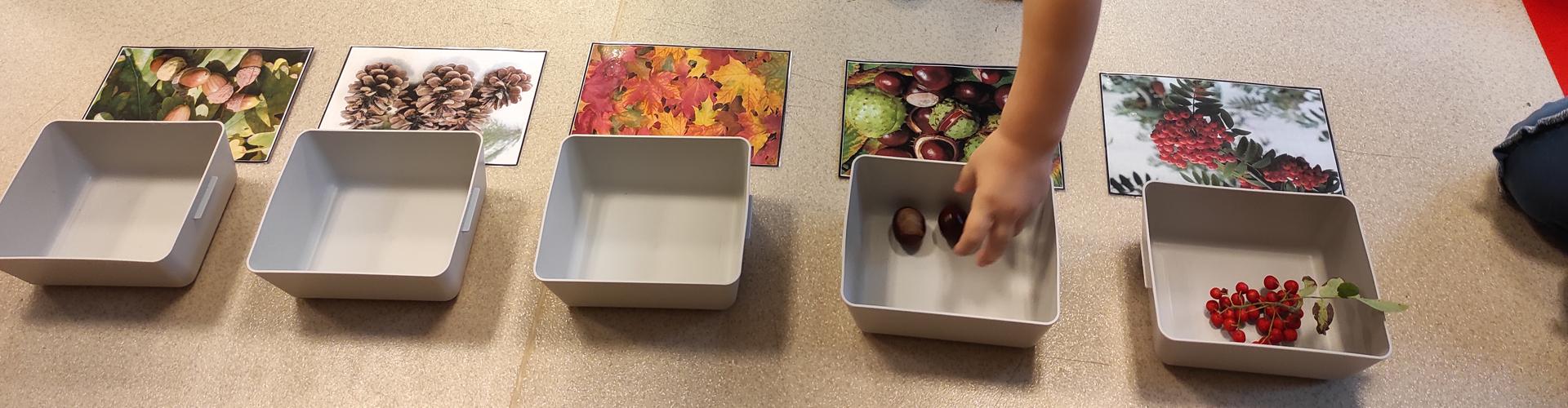 Zbieramy dary jesieni