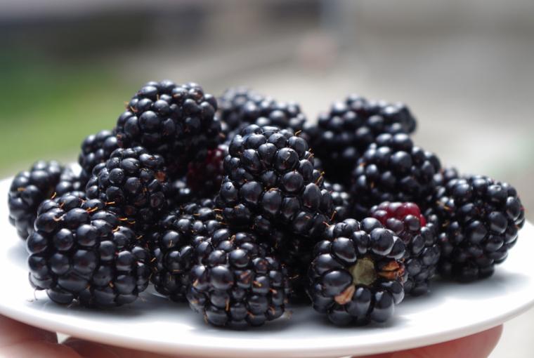 40. Jeżyny nie jarzyny, czyli czarne owoce