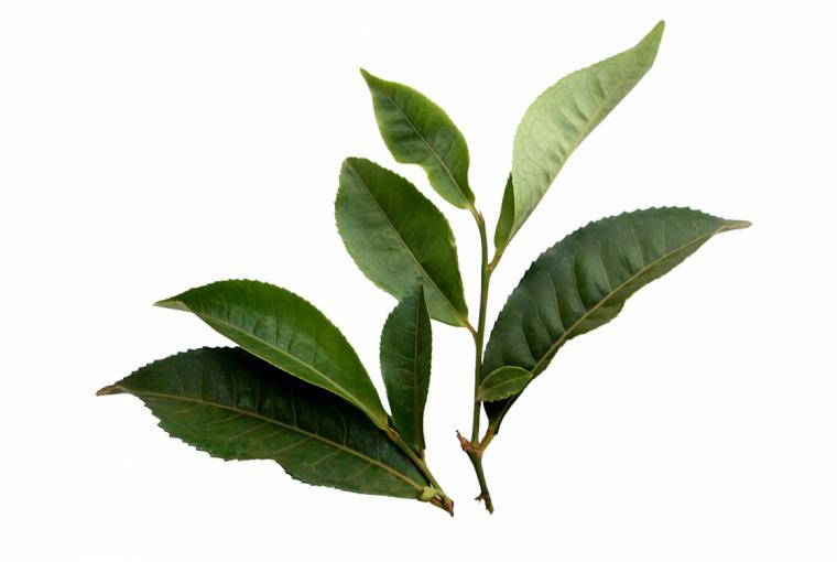 30. Herbata - czyli zdrowie w filiżance